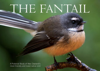 The Fantail (Large Version)