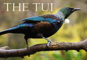 The Tui (Large Version)