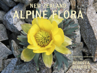 New Zealand Alpine Flora