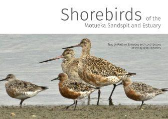 Shorebirds Of The Motueka Sandspit & Estuary